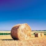 A experiência de reforma agrária do brasil